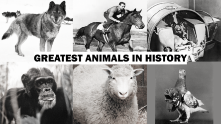 Great Animals In History